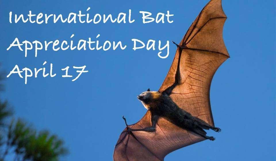 International Bat Appreciation Day Wishes Beautiful Image