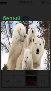 На снегу в лесу семья из белых медведей играет