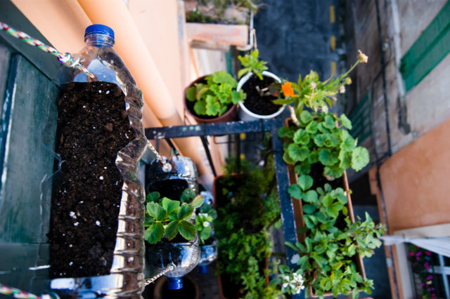 huerto urbano en un balcón con botellas de agua recicladas