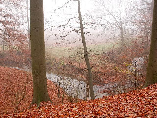 Die Windwehe fließt am Waldrand. Sie hat sich in den Boden eingegraben. Gegenüber ist ein Feld.