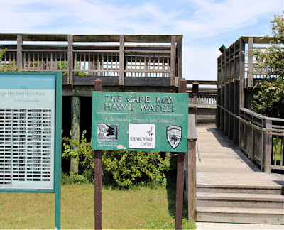 The Cape May Hawk Watch and Nature Trail in New Jersey