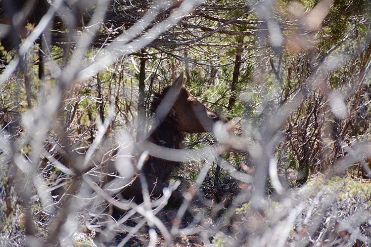 Grand Canyon Wildlife - South Rim | My Darling Days