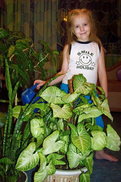 полив всех растений в Королевстве из Волшебной лейки
