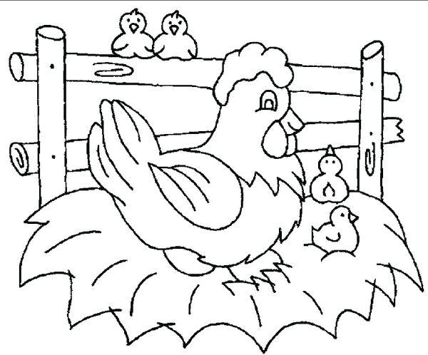 gambar sketsa ayam