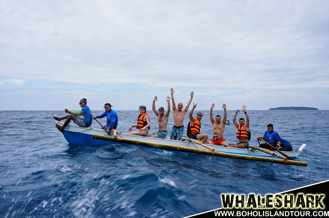 whale shark cebu