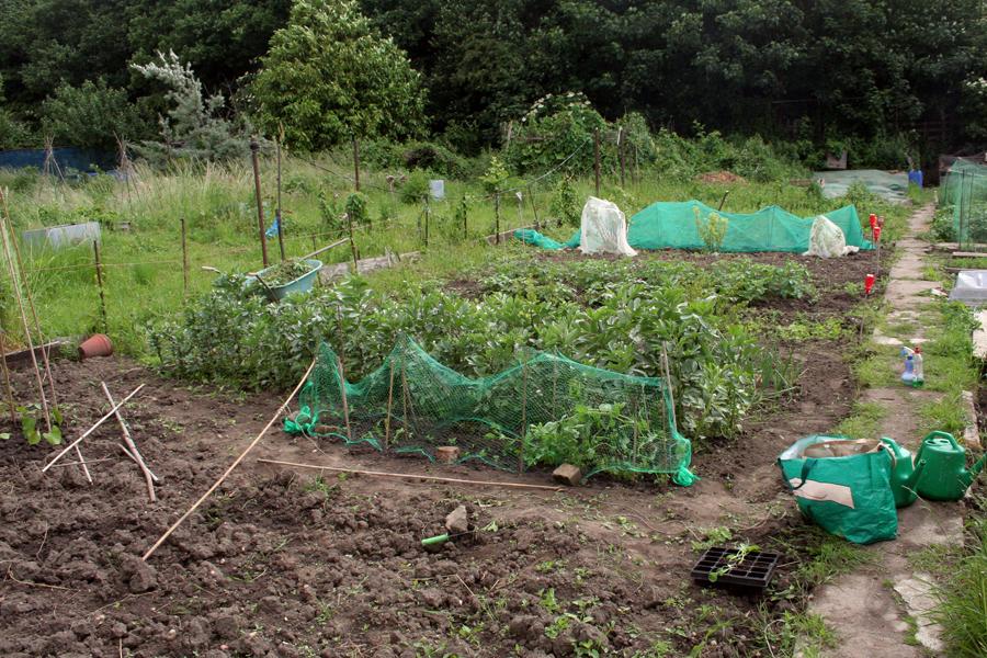 The Victory Garden Walthamstow June
