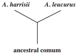 ancestral comum