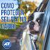Veja como proteger seu pet em passeios e viagens de carro