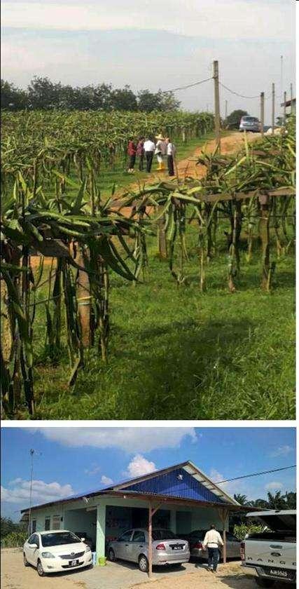 Ulu Tiram Dragon fruit farming location