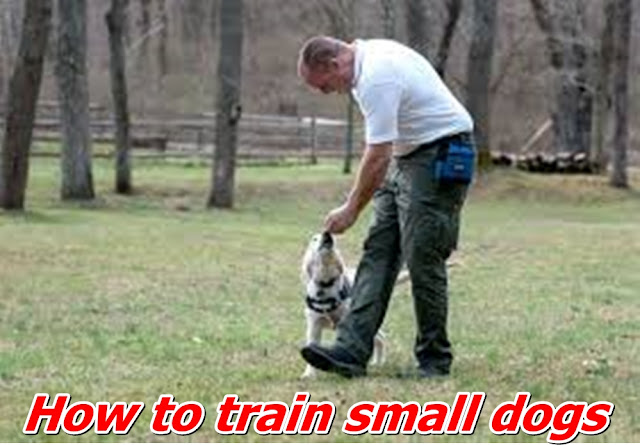 How to train small dogs