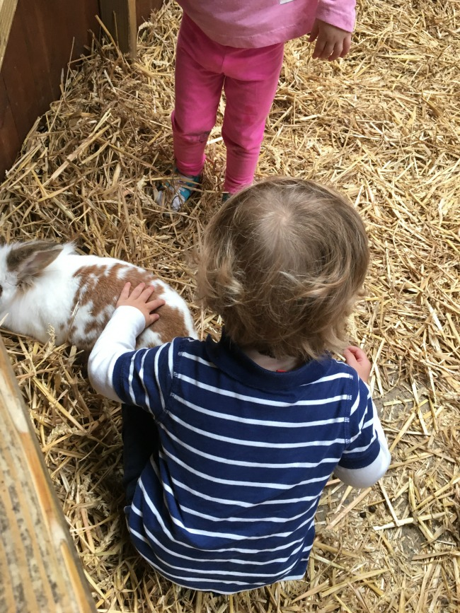 Walnut-tree-farm-park-A-Toddler-stroking-rabbit