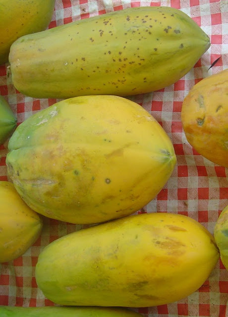 Quả chín Đu Đủ - Carica papaya - Nguyên liệu làm thuốc Chữa Bệnh Tiêu Hóa