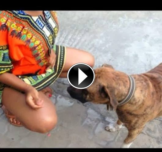 Dogs havng sex with humans