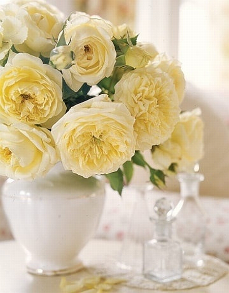beautiful light yellow roses