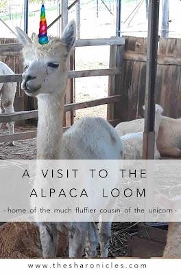 A visit to Cape Town's alpaca farm
