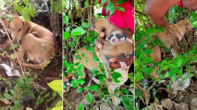 Anjing Bunting Dipukul dan Diusir Warga saat Akan Melahirkan, Akhirnya Bawa 8 Anaknya ke Semak-semak