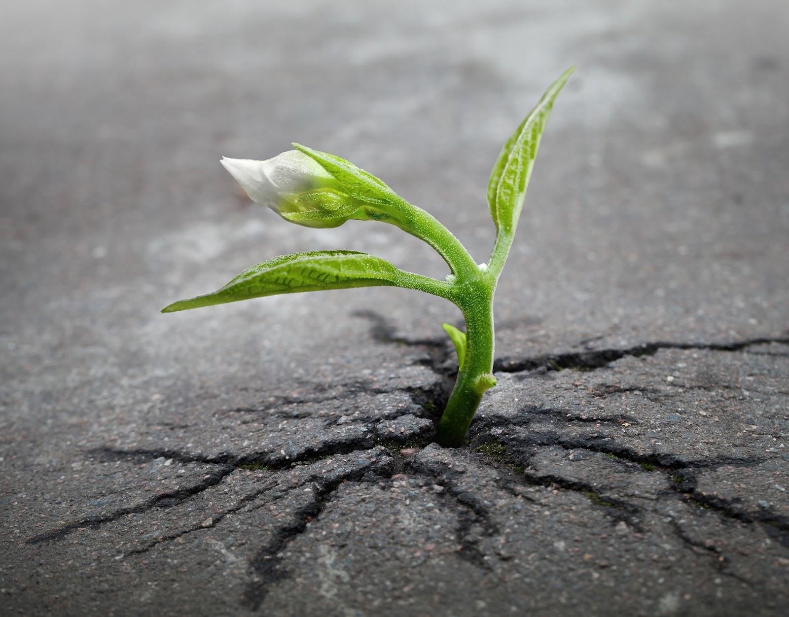 Todos Somos Clientes: 25 Frases Inspiradoras Sobre Resiliencia