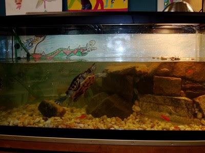 Turning the Scales: Red Eared Slider
