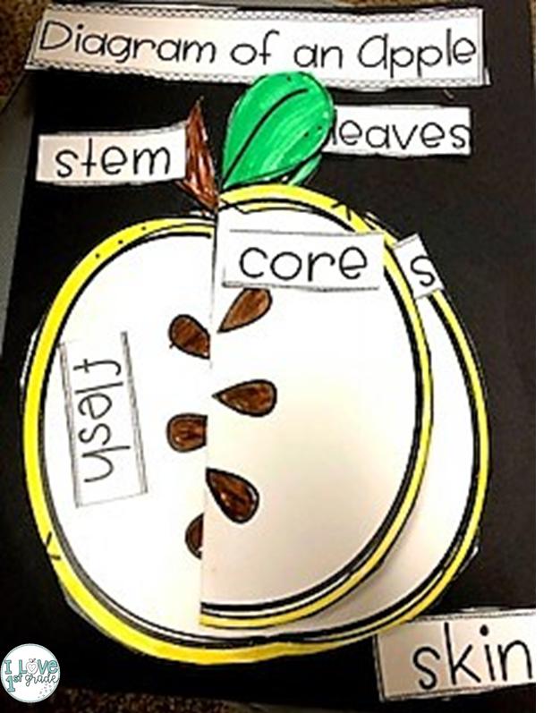 Apple Day I Love 1st Grade