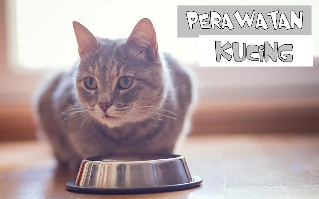 Biaya Bulanan Memelihara Kucing