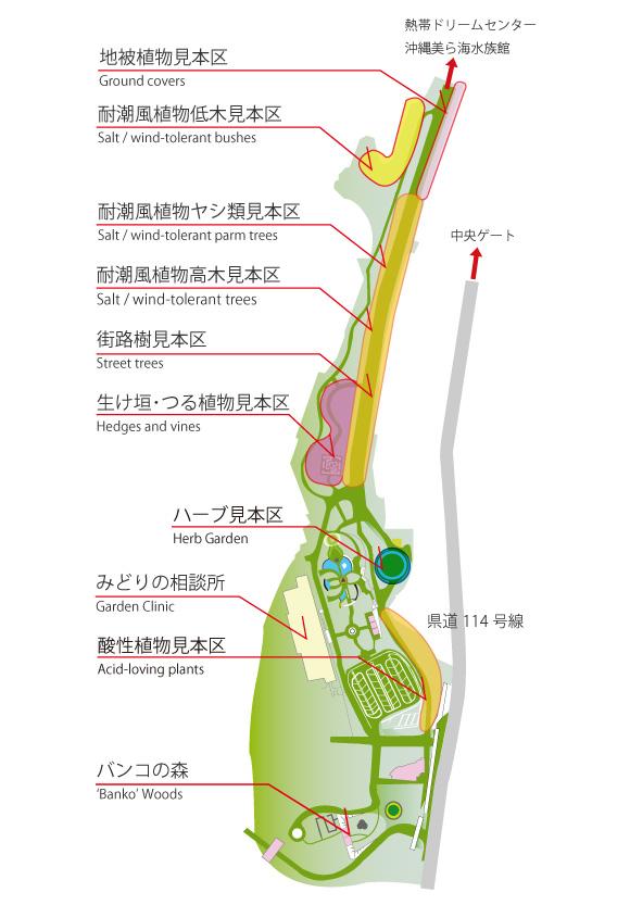 沖繩-海洋博公園-熱帶亞熱帶都市綠化植物園-景點-自由行-旅遊-旅行-okinawa-ocean-expo-park-Churaumi