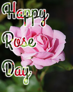 Rose Day images, Pictures & Wallpapers 2020
