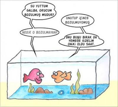 balık hafızası ne kadar