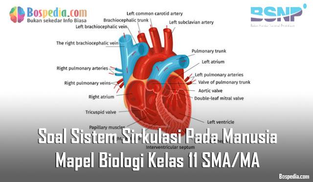 Soal Sistem Sirkulasi Pada Manusia Mapel Biologi Kelas 11 SMA/MA