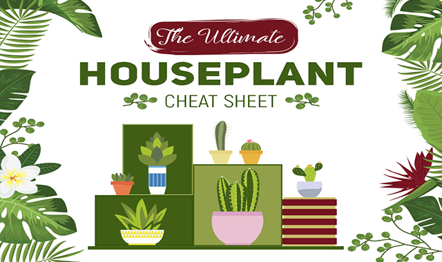 The Ultimate Houseplant Cheat Sheet #infographic