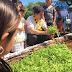 Cosechan resultados los huertos de traspatio en Maxcanú