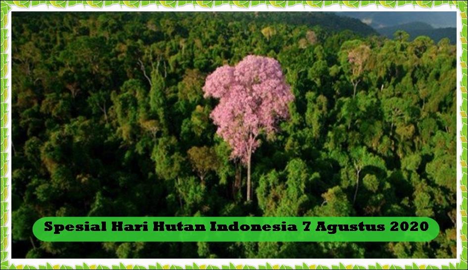 Spesial Hari Hutan Indonesia, 2 Misteri Hutan Tropis