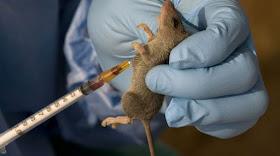 Lassa Fever Kills Doctor In Delta, 32 Others On Surveillance