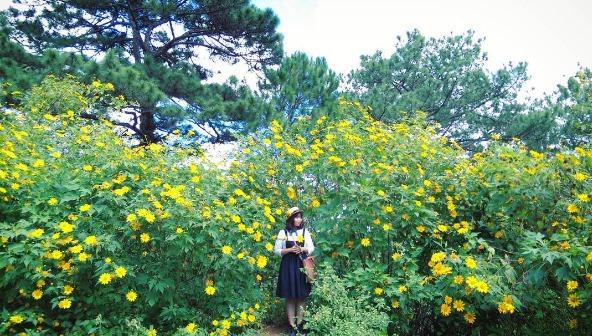 Những con đường hoa dã quỳ Đà Lạt