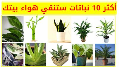 افضل 10 نباتات تنقي الهواء في البيت