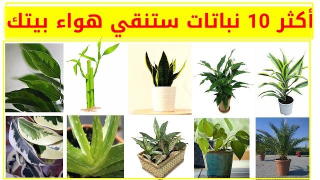 افضل 10 نباتات تنقي الهواء في بيتك و تجعلك تتنفس هواء نقي