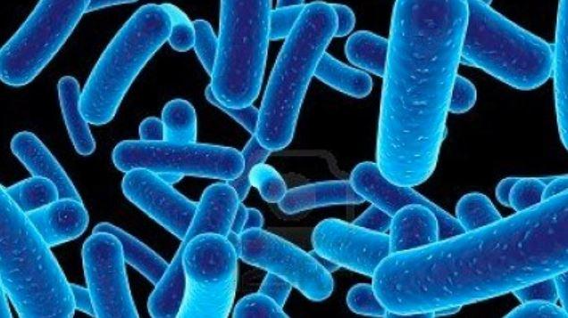 mikroorganisme penyebab keracunan makanan