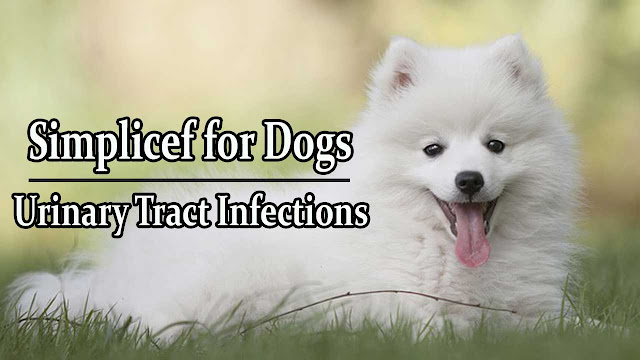 simplicef-for-dogs-urinary-tract-infection