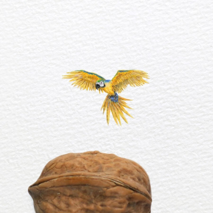 05-Parrot-Frank-Holzenburg-www-designstack-co