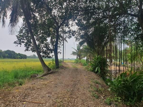 ขายที่ดิน คลอง9 รังสิต - ธัญบุรี ตะวันตก เข้าจากปากคลองประมาณ 3 กม. อ.หนองเสือ จ.ปทุมธานี