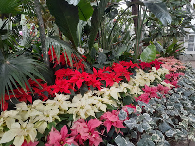 Allan Gardens Conservatory 2019 Winter Flower Show twentythree by garden muses--not another Toronto gardening blog