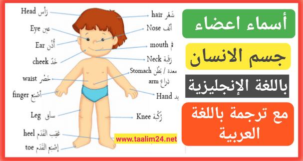 Parts Of The Faceاجزاء الوجه بالانجليزي