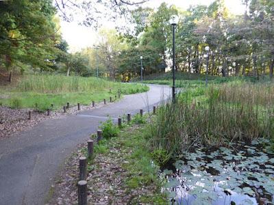 花博記念公園鶴見緑地 花の谷 スイレン池