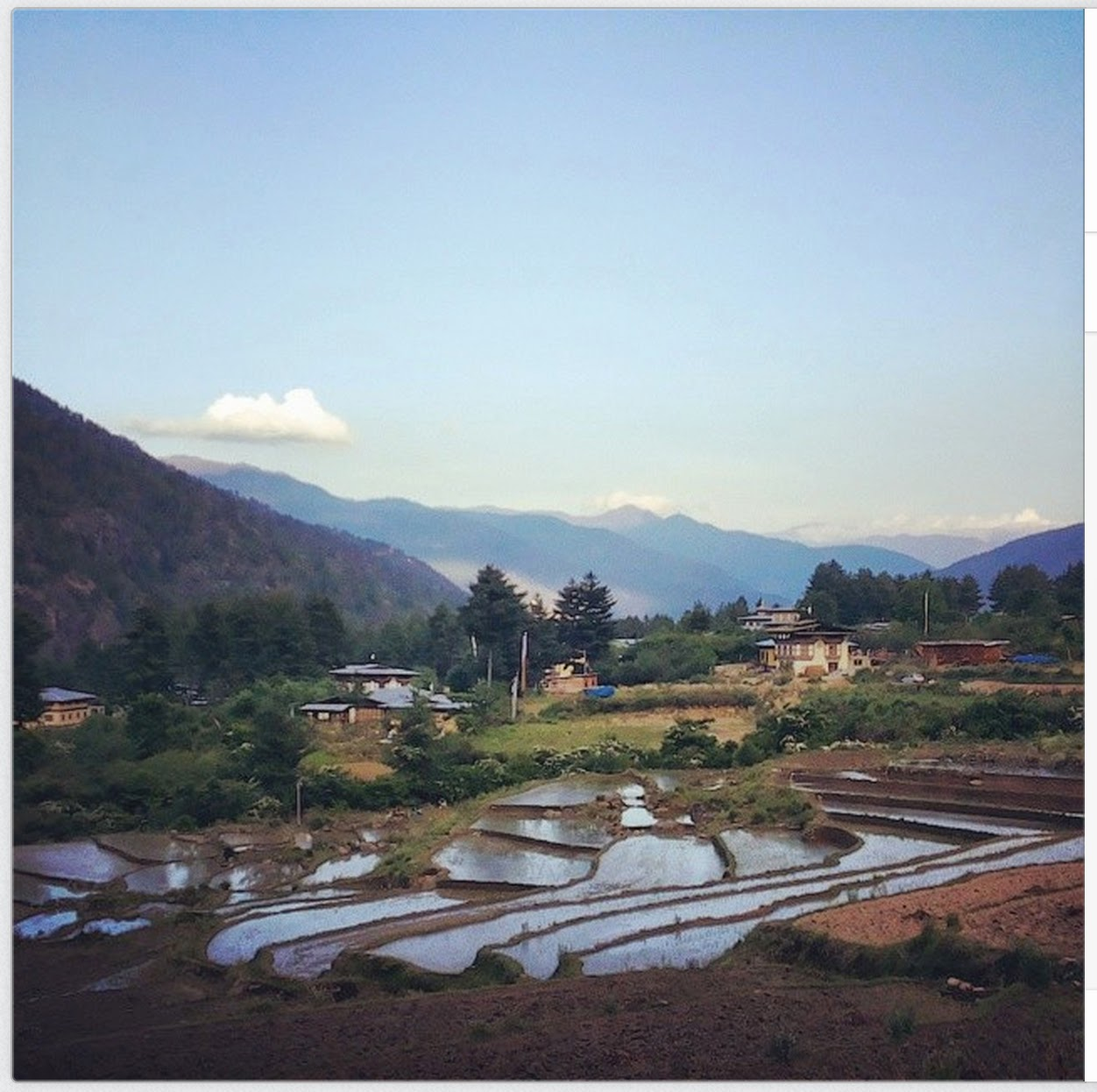 Rice Fields of Paro, Bhutan