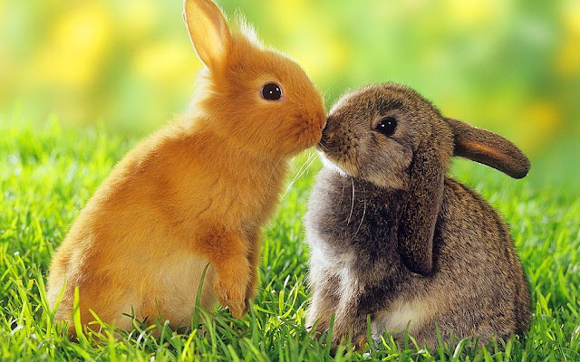 tavşan isimleri