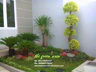 jual pohon bromelia dengan harga paling murah cocok untuk taman minimalis