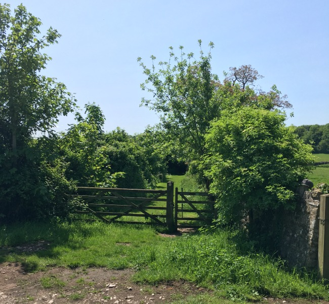 wooden gate leading to grass path between two hedges