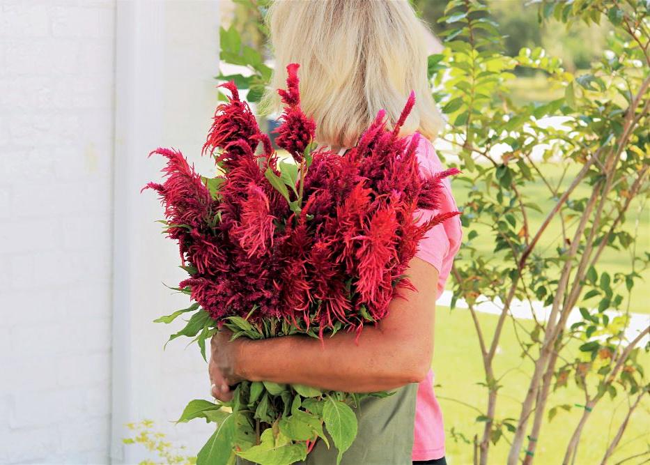 celosia-flower-grower-farm-facts-garden-gardening-athomewithjemma