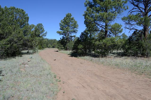 soft dirt road