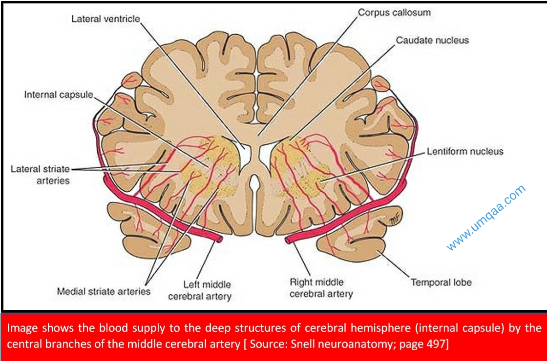 Blood supply to the deep structures of the cerebral cortex