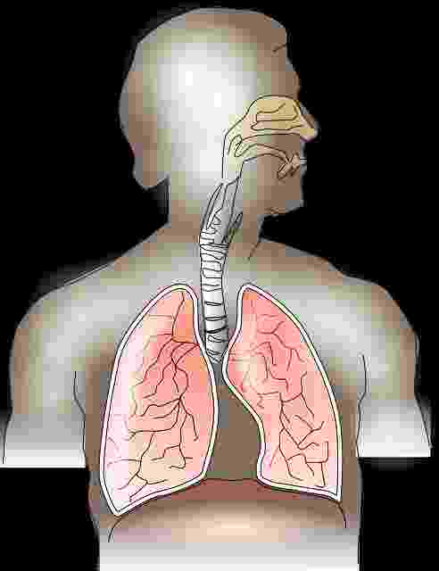 Home remedies to increase oxygen level in the body and To Make Lungs Healthy And Strong.